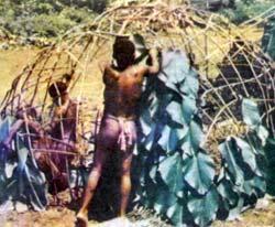 Фото №3 - Люди леса