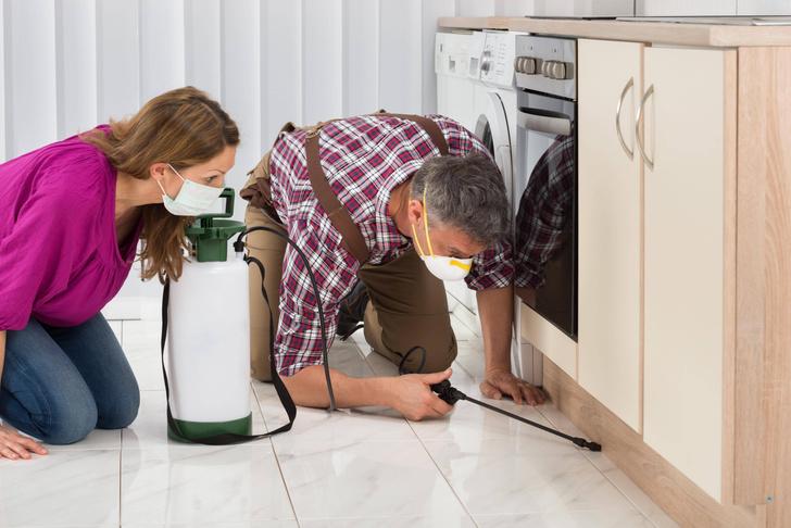 Что делать, если дома появились тараканы