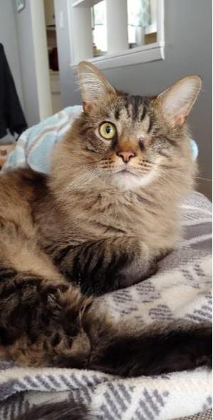 Фото №5 - Дом меняет все: 35 фото котиков до и после усыновления