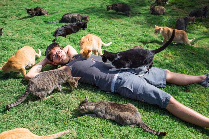 Фото №1 - Карта: сколько котов живет в разных странах Европы