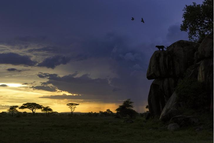 Фото №1 - Джунгли на закате