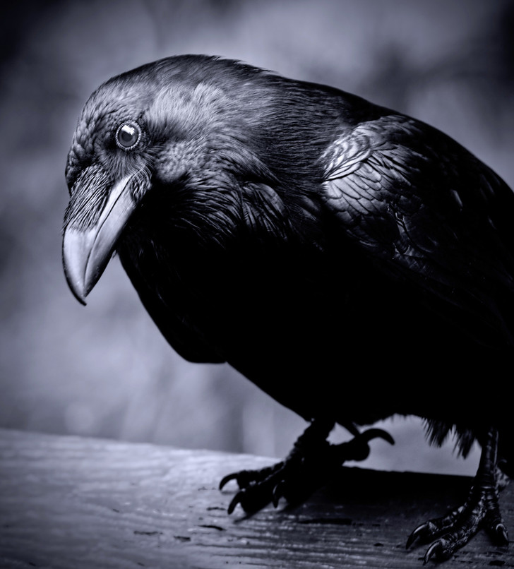 Фото №1 - Какие птицы самые умные?