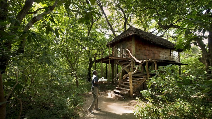 Экотренд: отели на деревьях (фото 35)