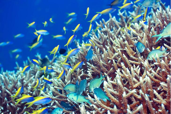 Фото №3 - Национальное достояние: каменные джунгли на Мальдивах