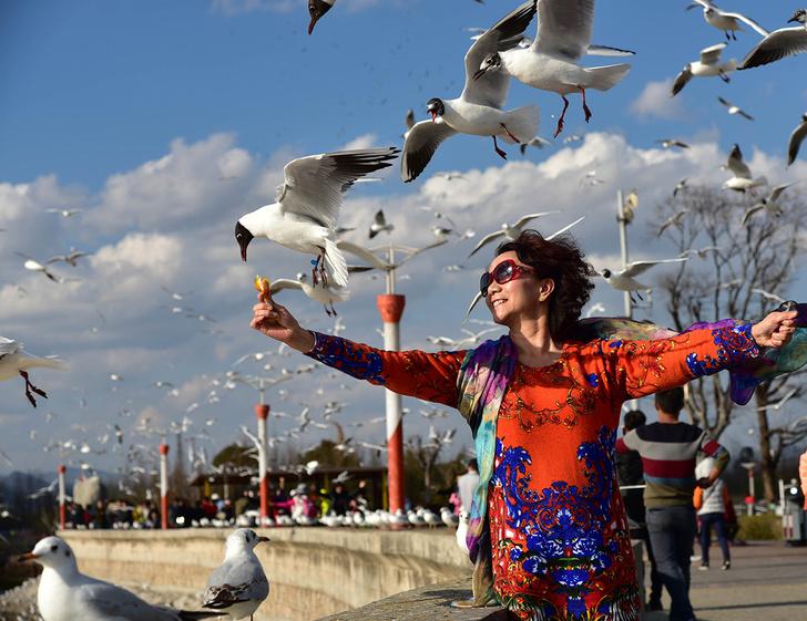 Фото №1 - Птицы