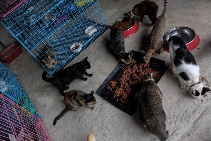 Фото №1 - Ученые оценили рецепты домашней еды для кошек