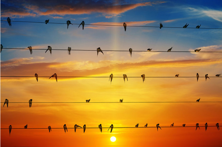 Фото №1 - Глобальное потепление меняет поведение перелетных птиц