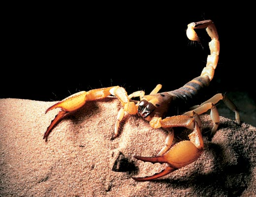Фото №1 - Тропик скорпиона